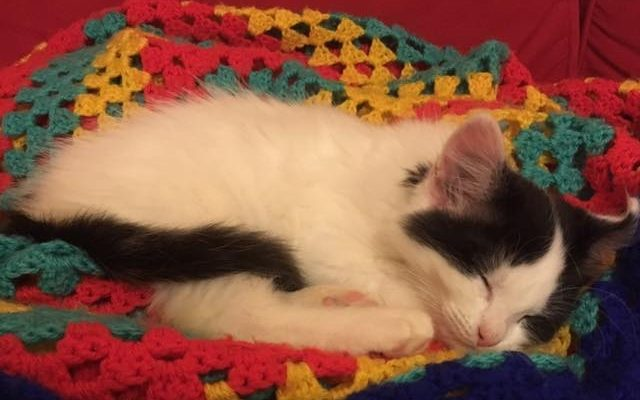 Alfie the tech for good kitten having a snooze